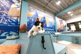 Covington's Purrfect Day Cat Cafe Sets Opening Date