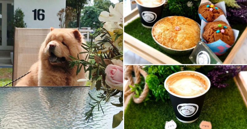 Chow Cute Is A Pet Cafe With The Adorable Dogs That Promises A Woof-derful Time In S'pore Singapore Foodie