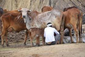 Karnataka beef ban: Beyond restaurant menu, here's how things will change