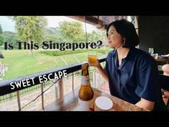 Hidden Cafe In Singapore (Dining with Horses) #asmr #wheretoeatSg#vacation #FarmCafe